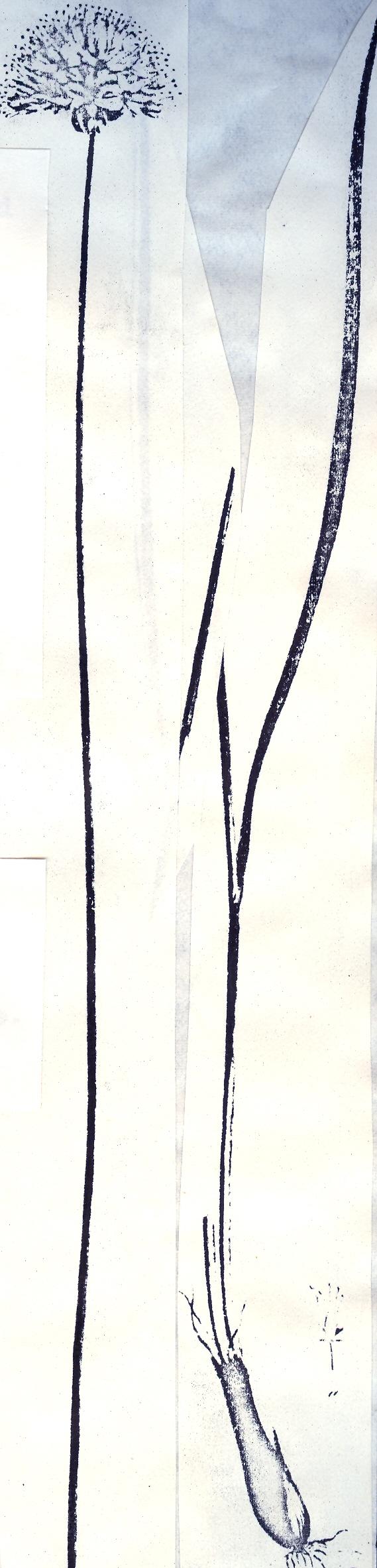 Allium%20flavidum.jpg