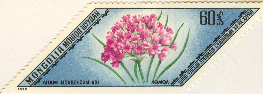 Allium%20mongolicumF.jpg