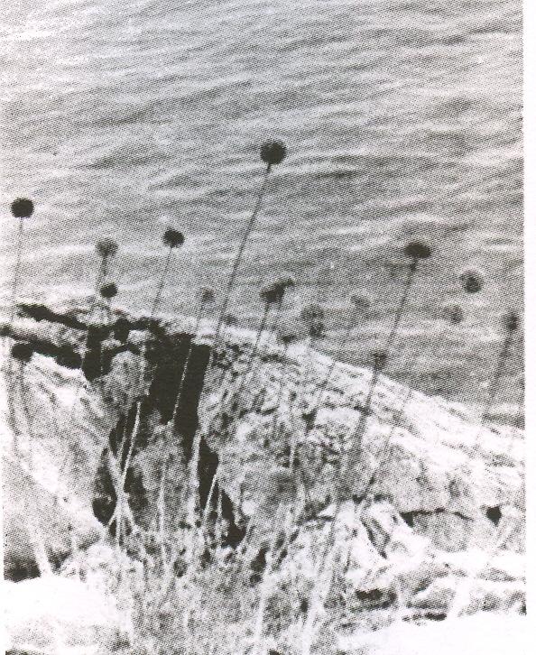Allium%20salsuginis%20f%20spiritus-procellarum.jpg