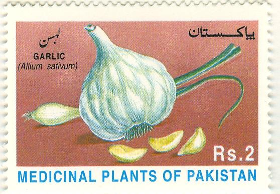 Allium%20sativumF.jpg