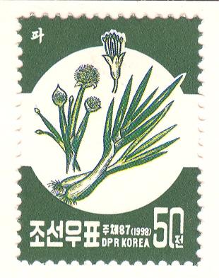 Allium%20tuberosumF.jpg